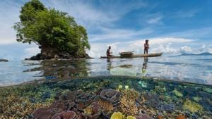 Papua New Guinea Corals