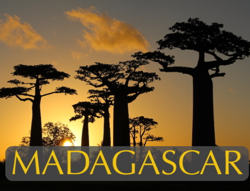 The Weird & Wonderful World of Madagascar