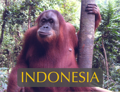 North Sumatra Safari