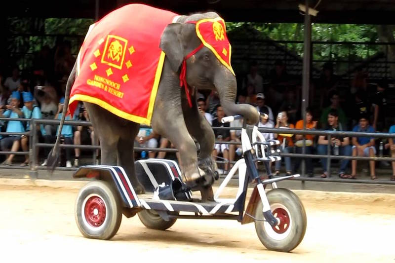 Air Filled Elephant With Motor