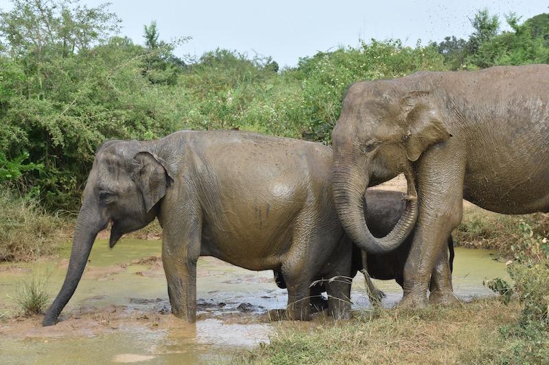 ISB Discovers Sri Lanka